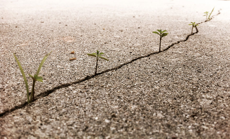 flower-tree-growing-concrete-pavement-6